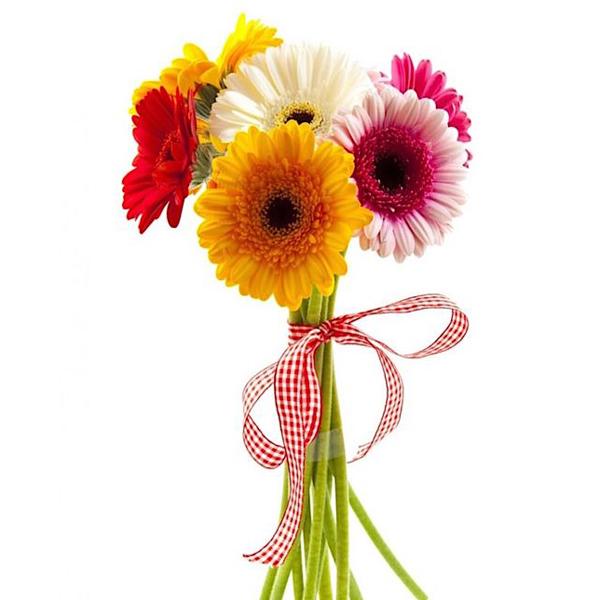 Купить цветы гербера, герберы букет